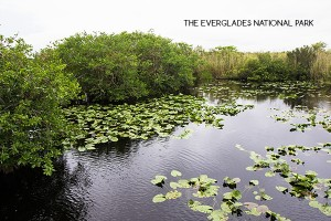 Why we were disappointed with the Everglades National Park