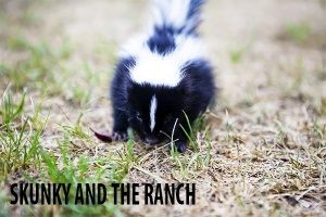 Skunky and the Ranch